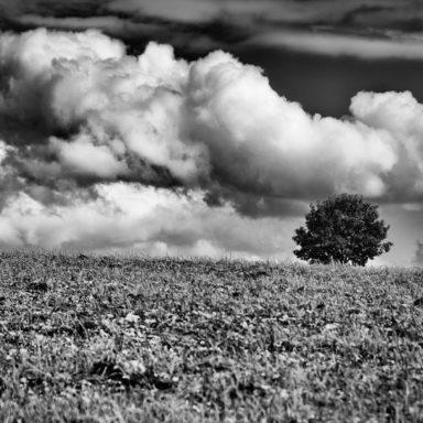 Hochdramatisch: Baum auf weiter Flur