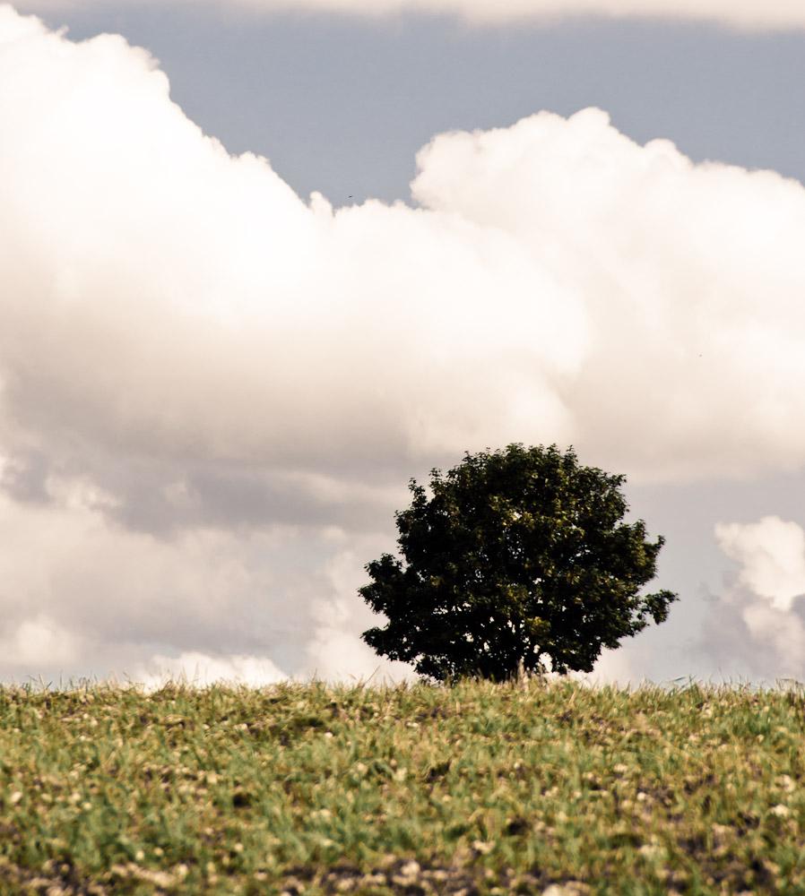 Doch nicht so dramatisch: Baum auf weiter Flur