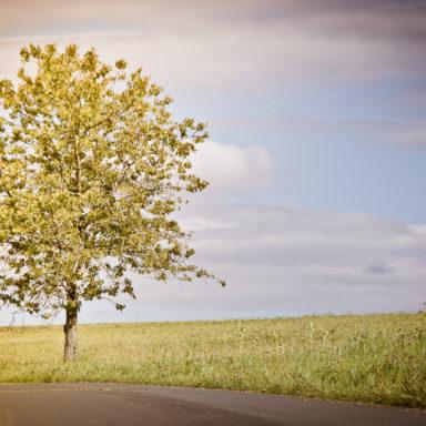 Baum am Straßenrand bei Hohenpölz