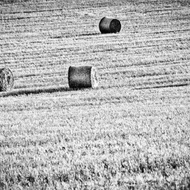Abgeerntetes Getreidefeld bei Tiefenpölz