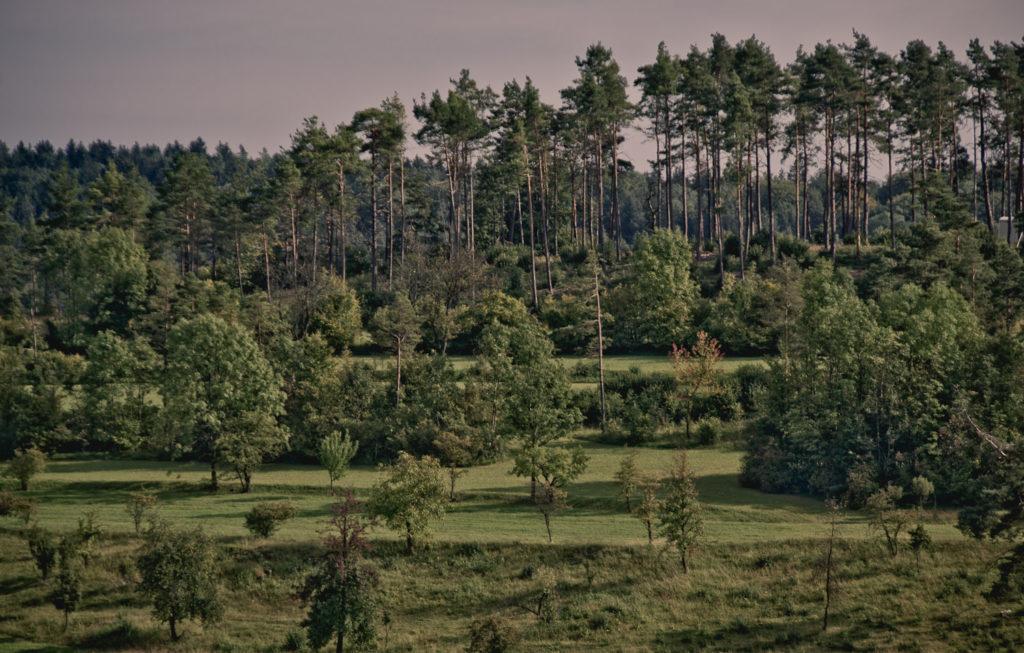 """Blick auf den geschützten Landschaftsteil """"Amstling"""" bei Tiefenhöchstadt"""