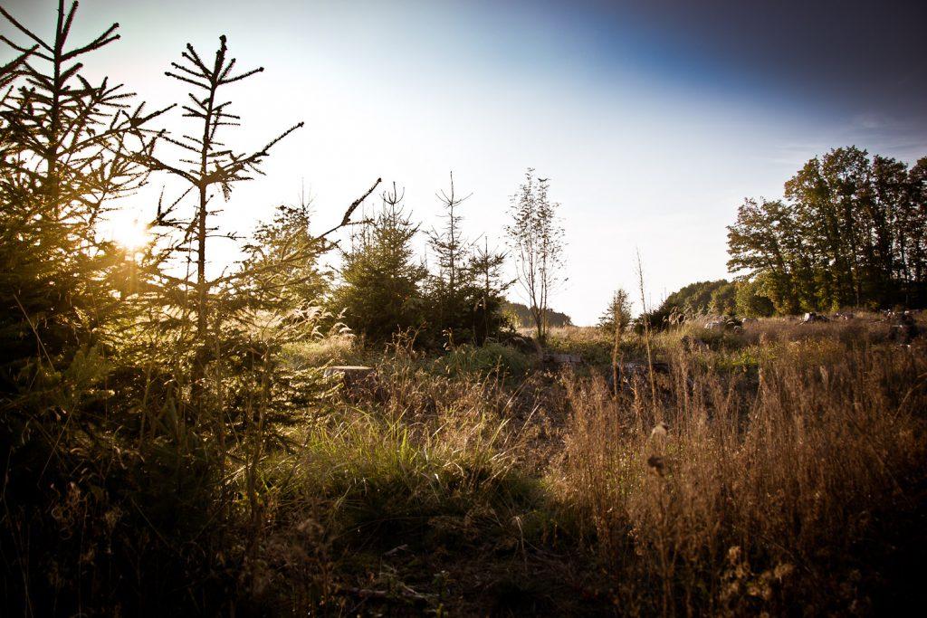 Irgendwo zwischen Haidhof und Mittelehrenbach: zwischen Aufforstung und Ernte