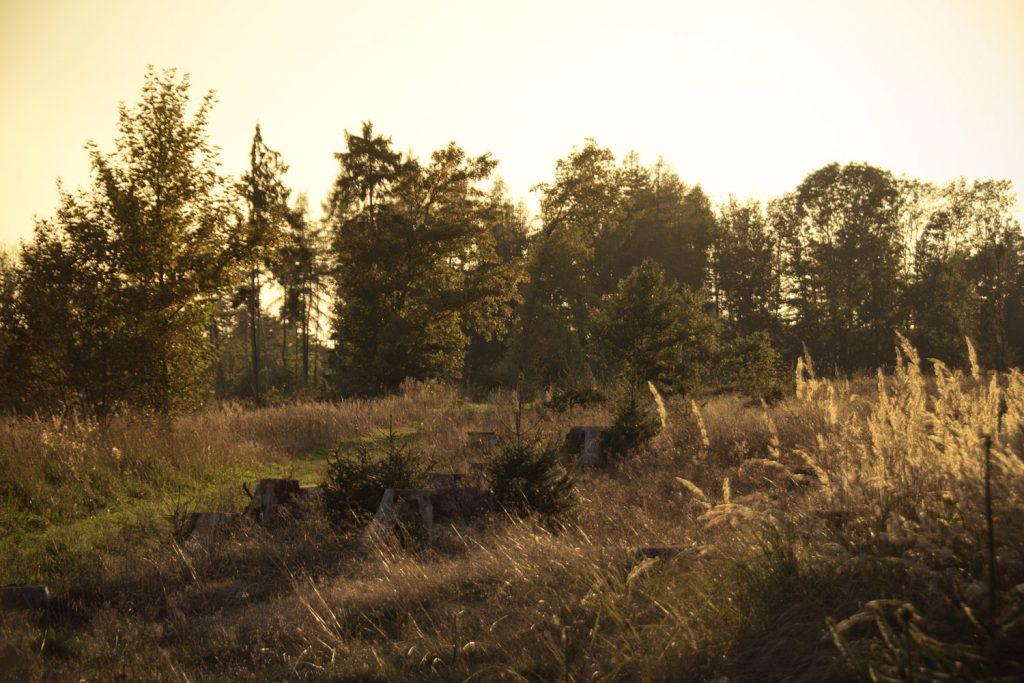Die letzten Sonnenstrahlen des Tages: irgendwo zwischen Haidhof und Mittelehrenbach