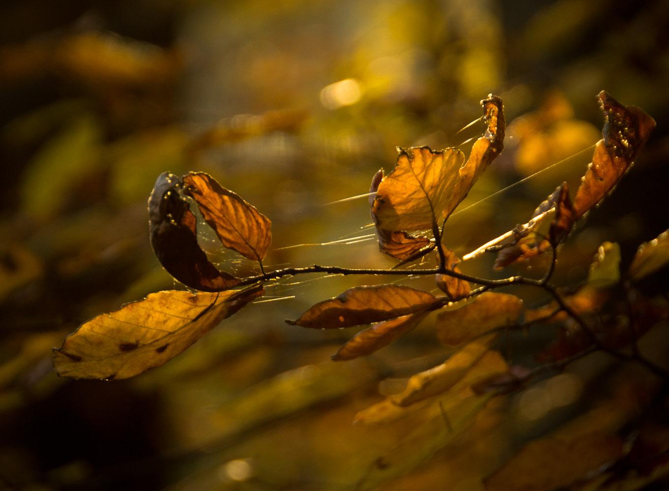 Herbstblätter – outdoor
