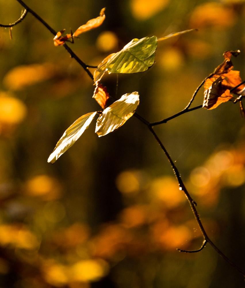 Herbstblätter im Wald – outdoor