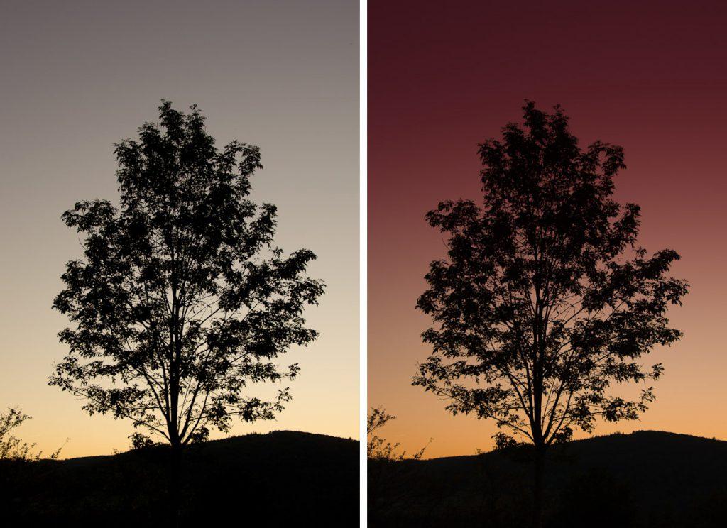 Ein Baum im Sonnenuntergang im Herbst bei Heiligenstadt – bearbeitet mit Adobe Lightroom