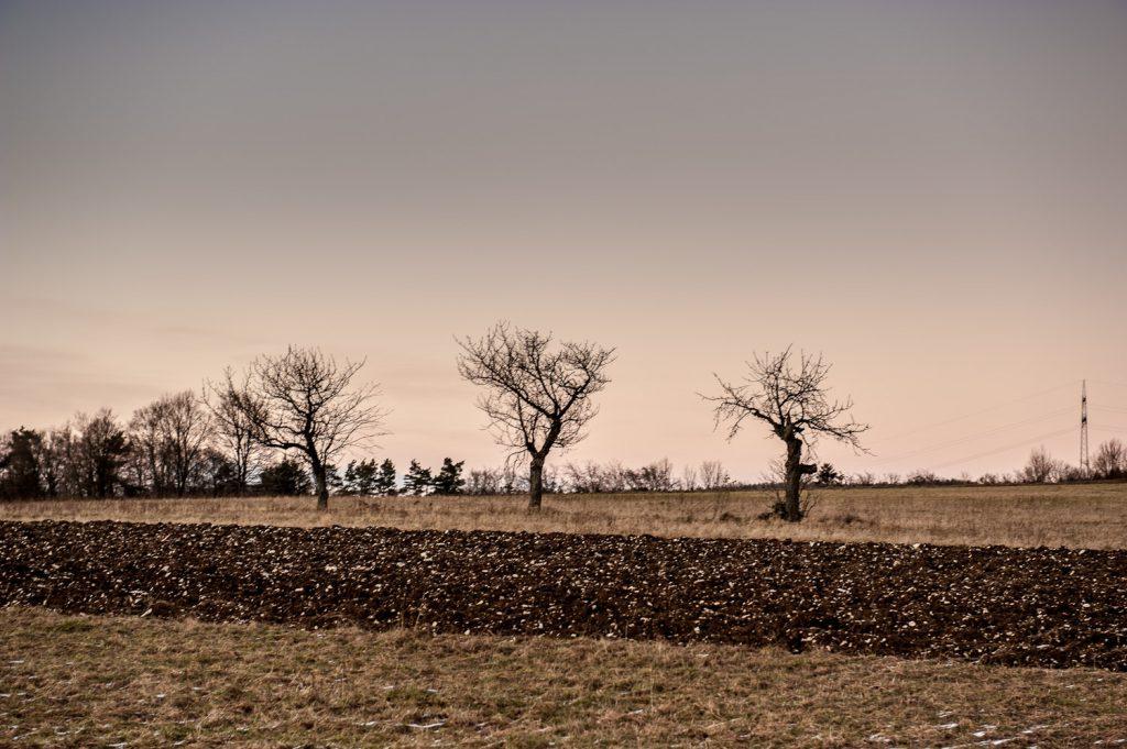 Wiesen, Felder und Obstbäume in der Nähe von Haidhof