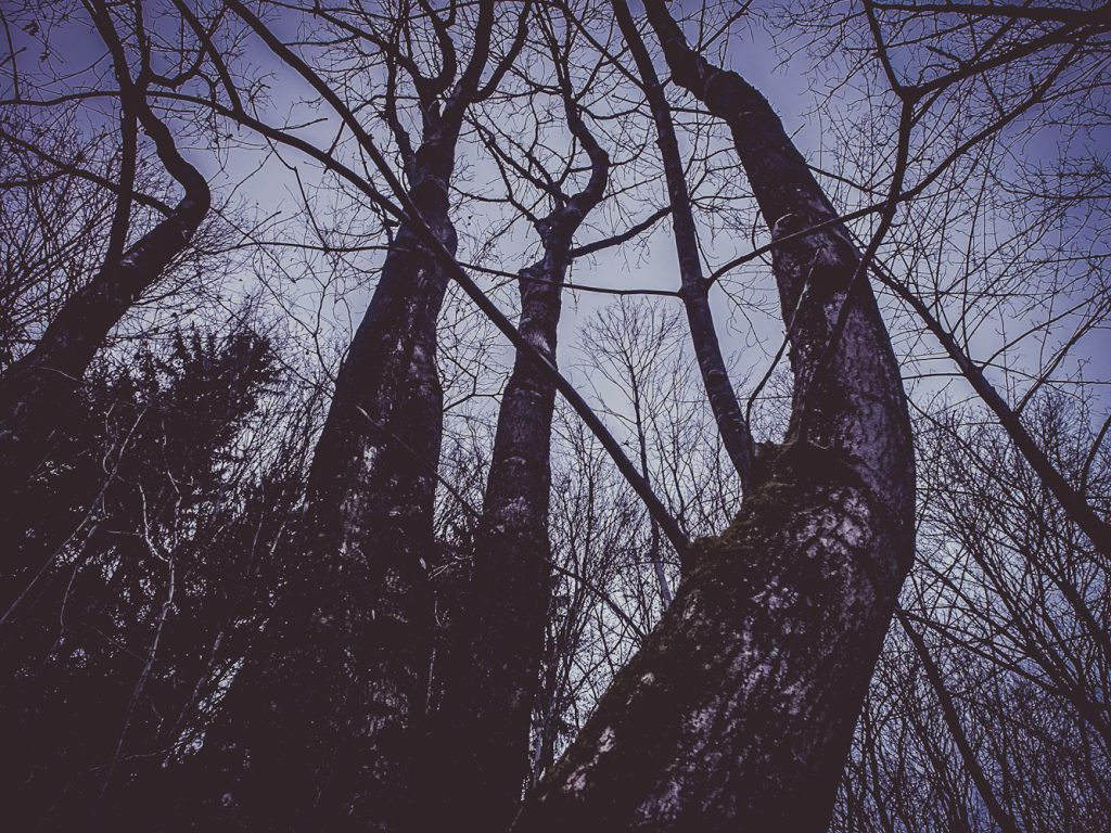 Bäume im Lillachtal