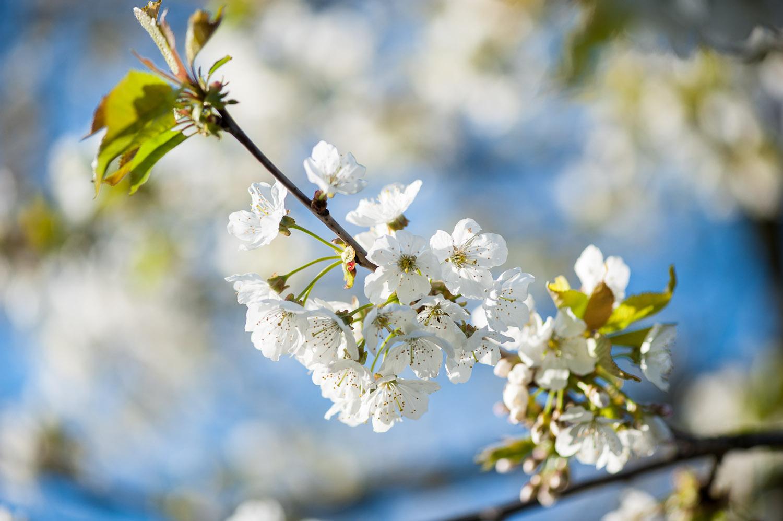 Oh, ich glaub' es wird Frühling