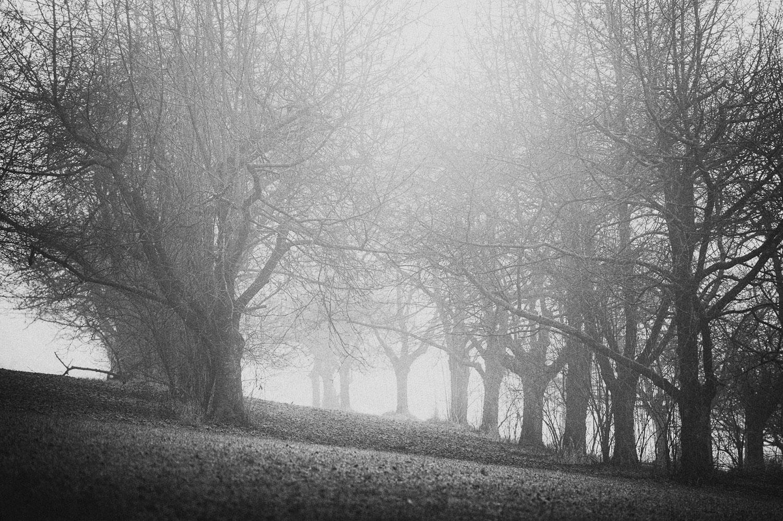 Kirschbäume im Nebelmeer