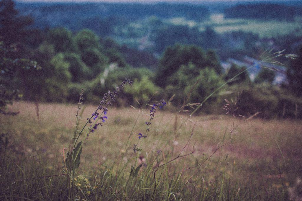 Am Wegesrand der Finkenleite