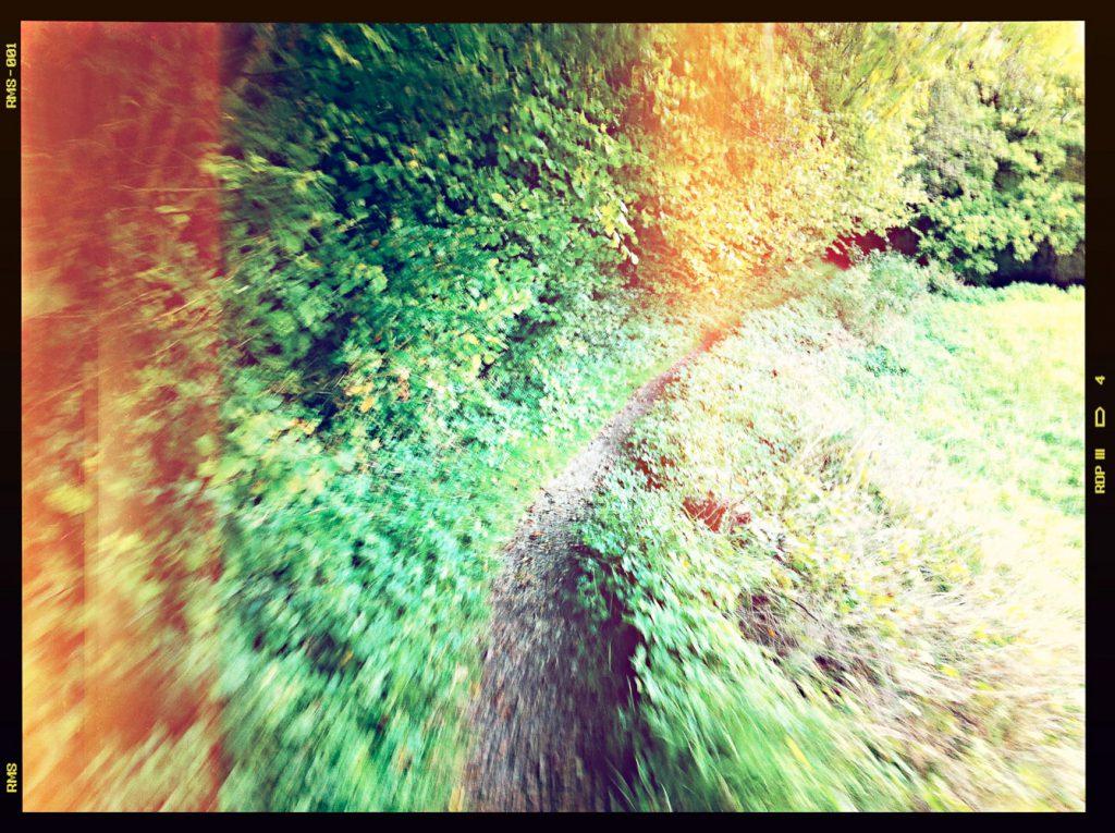 Singeltrail nach Mostviel