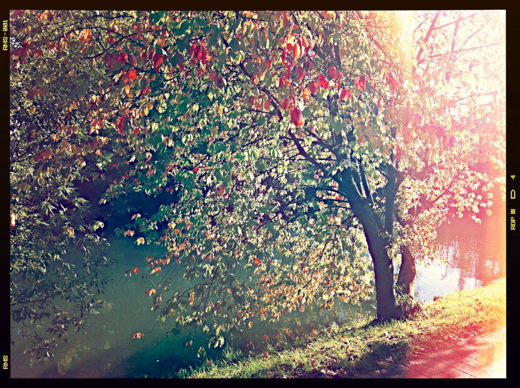 An der Wiesent in Ebermannstadt: der Herbst kommt