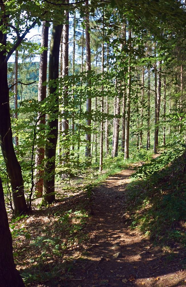 Frohsinn bereitende Waldwege und Trails, nicht nur auf den ersten Kilometern