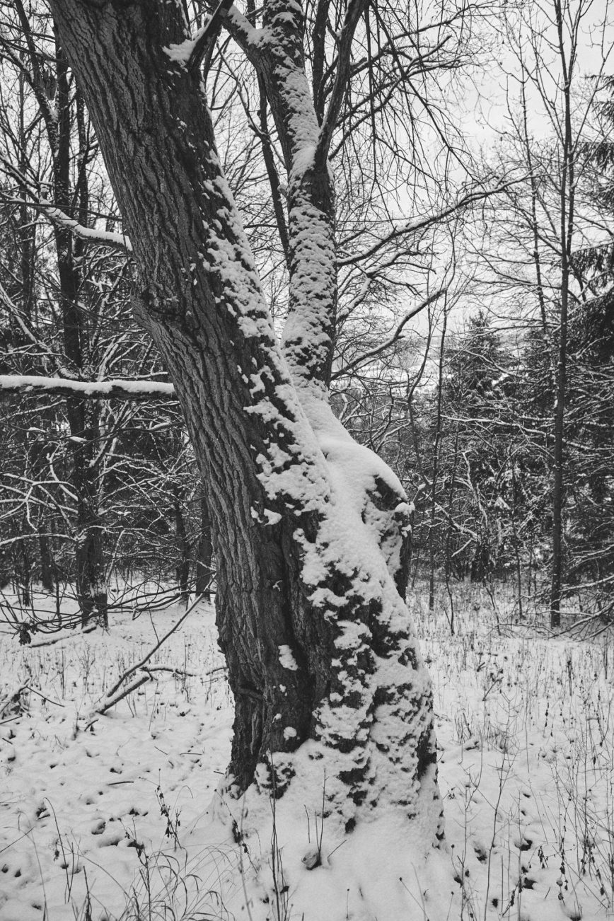 Winter Wonder Wood